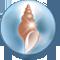 Coquillage Amphitrite
