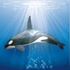 lululove36 - joueur Oceanzer